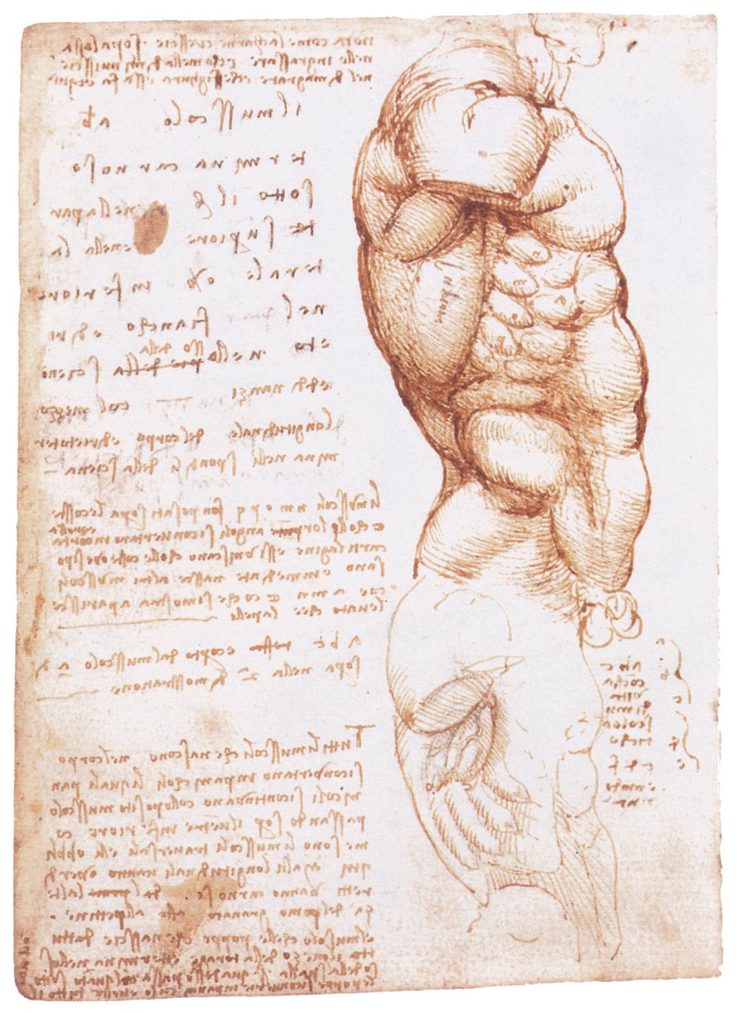 Эпоха возрождения анатомия
