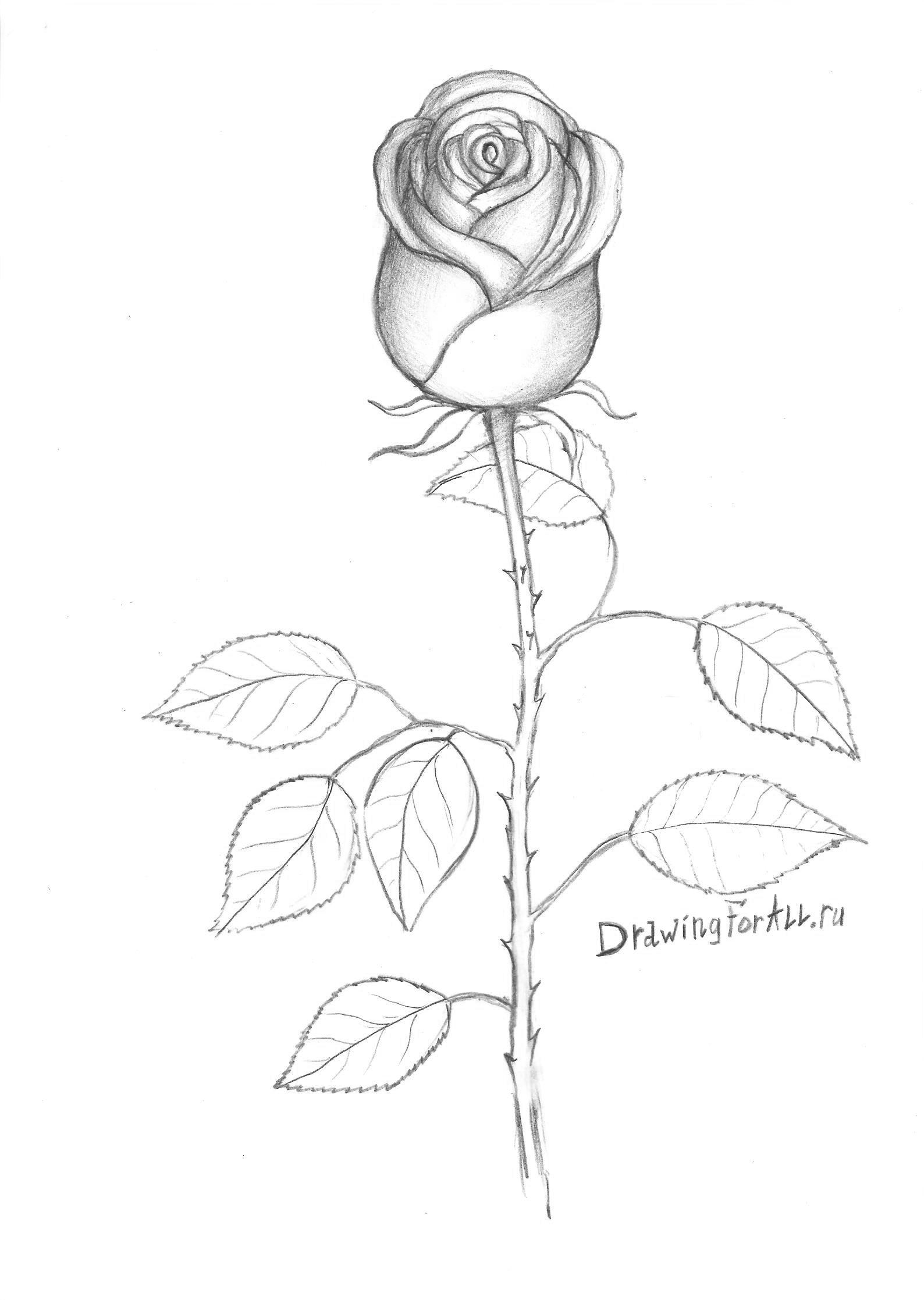 Роза наложение теней