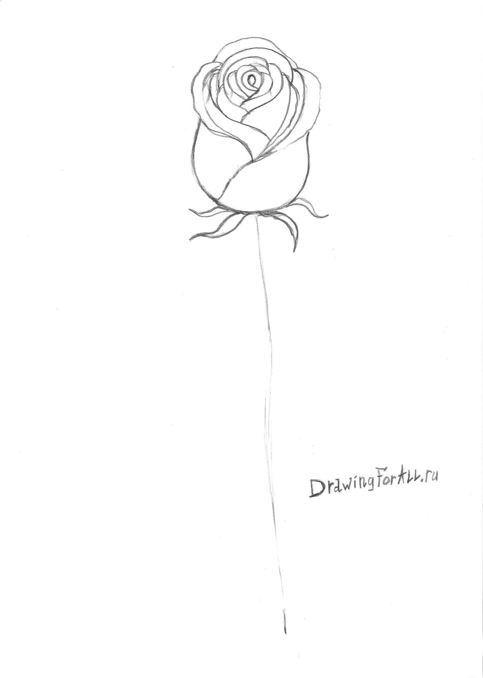 листья под бутоном розы
