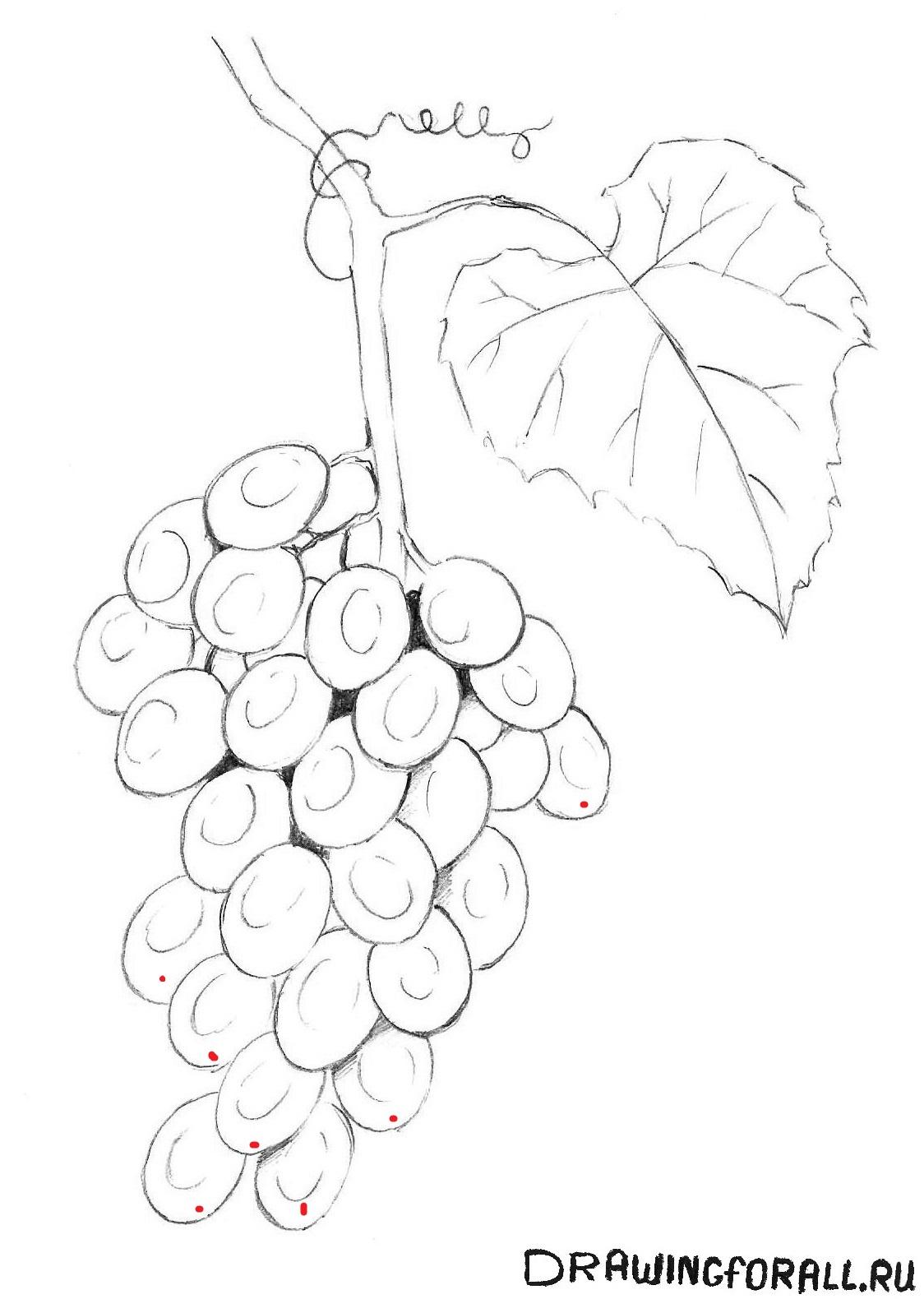 рисуем виноградную кисть