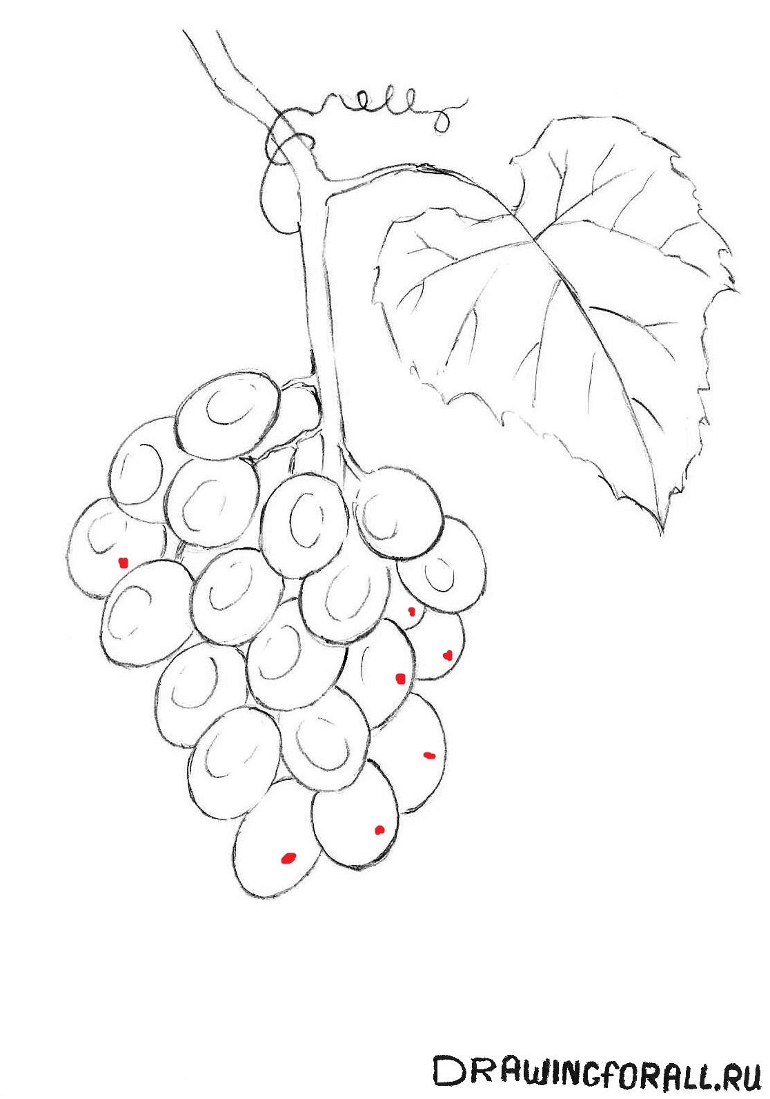 рисуем виноград поэтапно карандашом