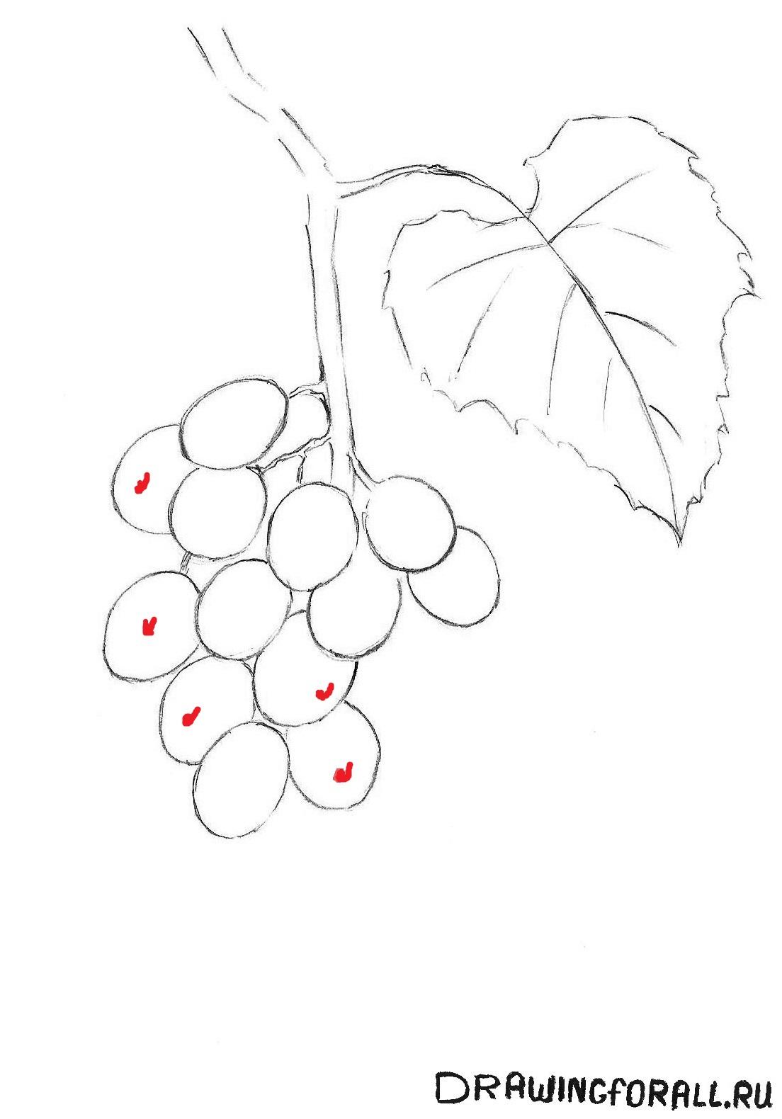 рисуем виноград