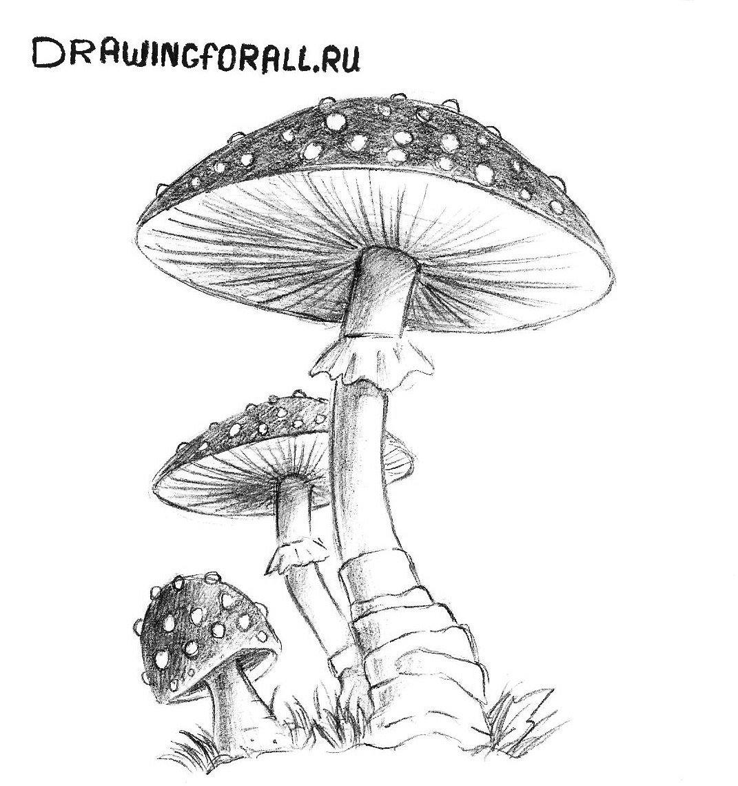гриб нарисованный