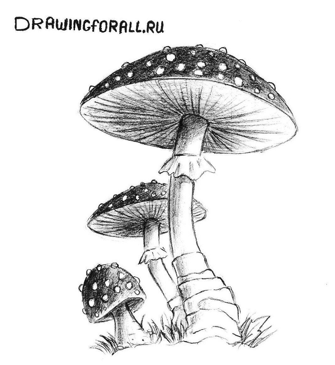 как нарисовать грибы поэтапно карандашом