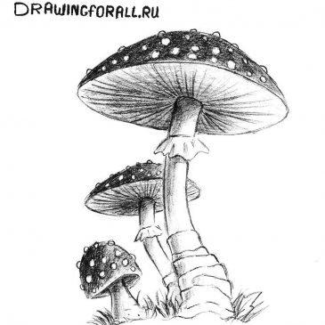 Как нарисовать гриб