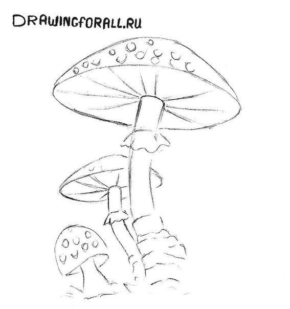 как нарисовать гриб карандашом