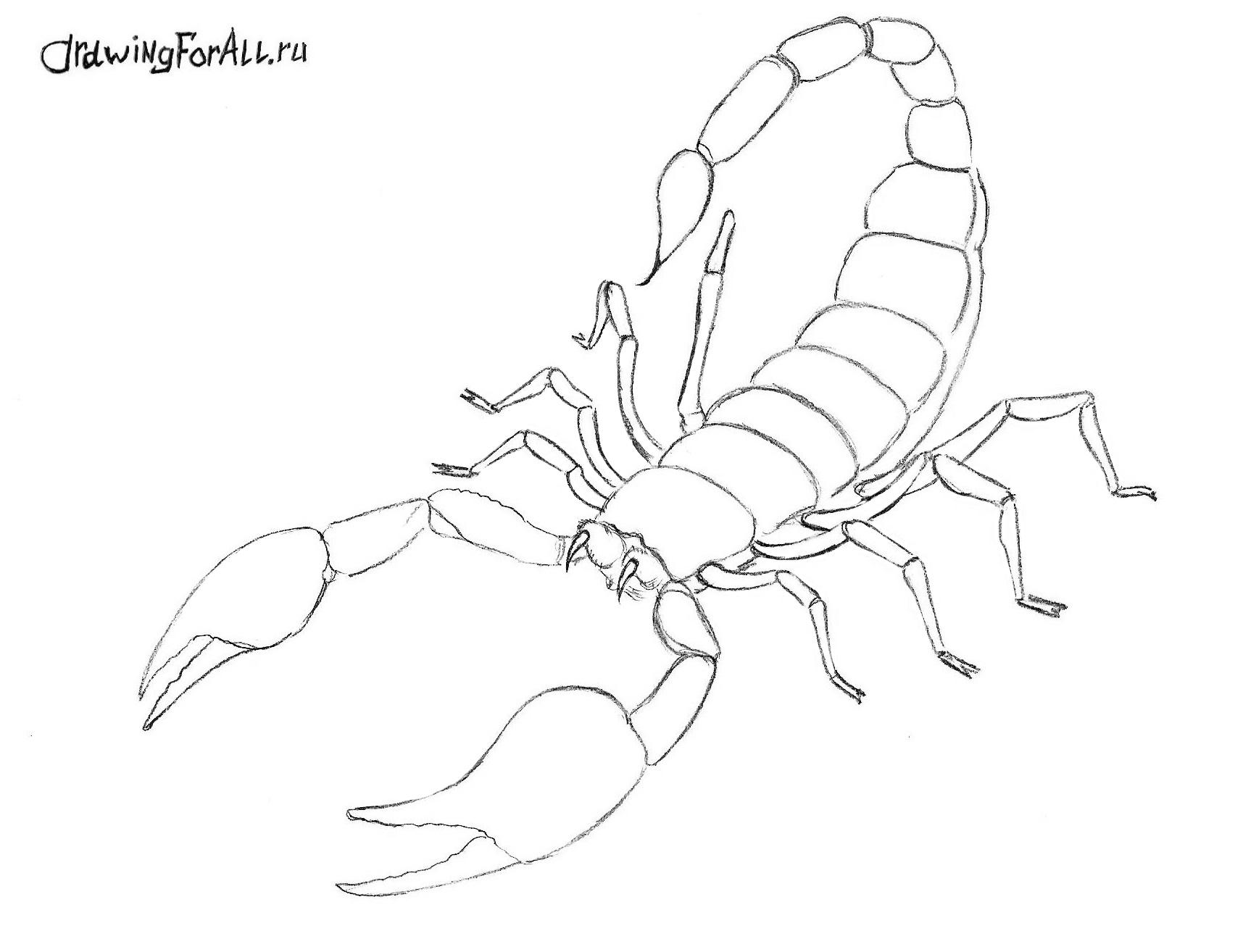 Золотой маньчжурский скорпион рисунки поэтапно 5