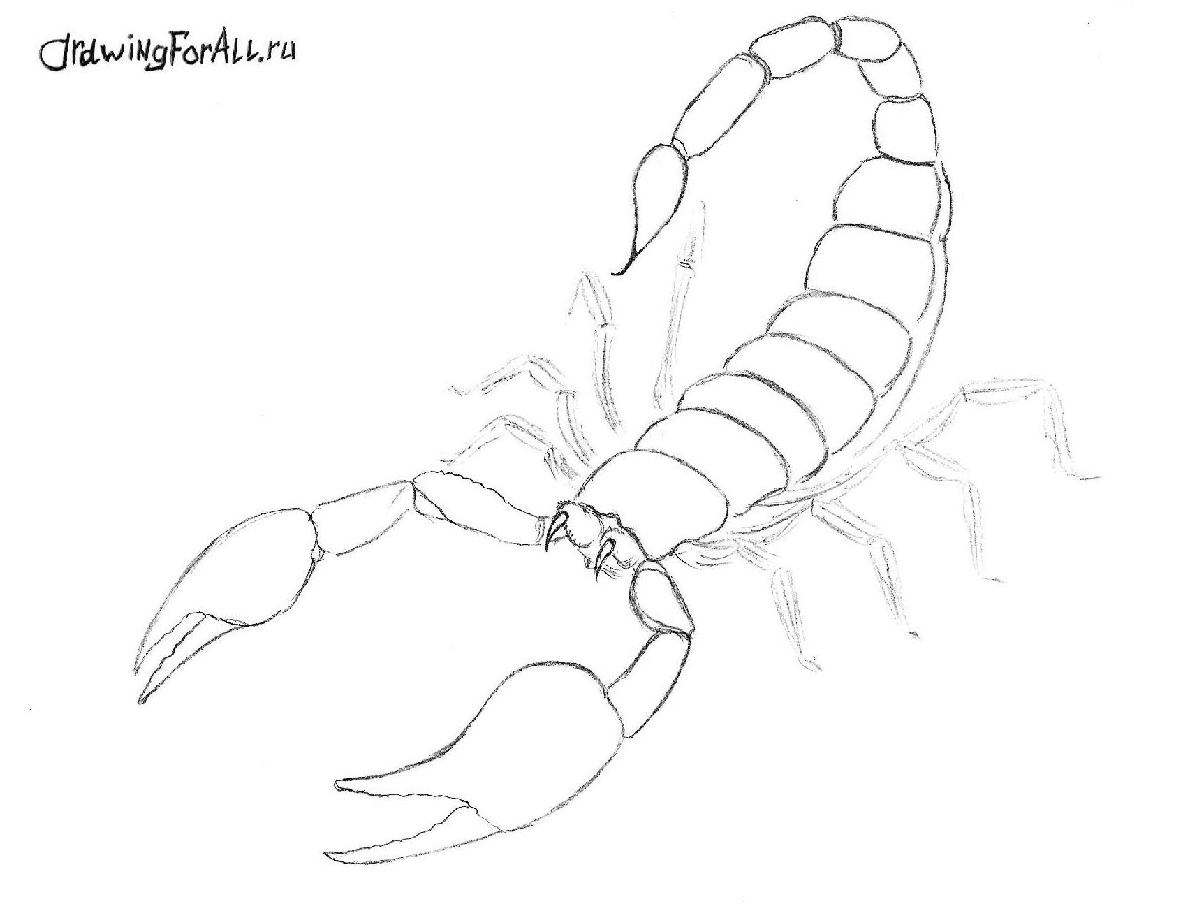 Золотой маньчжурский скорпион рисунки поэтапно 4