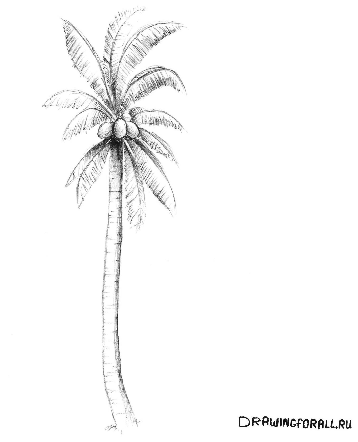 Как нарисовать пальму