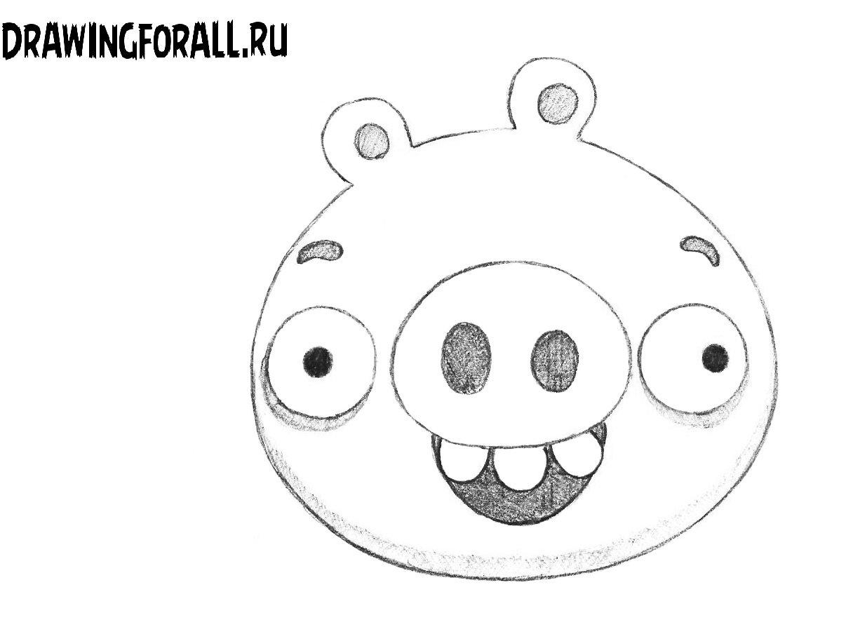 как нарисовать энгри бёрдз свинью