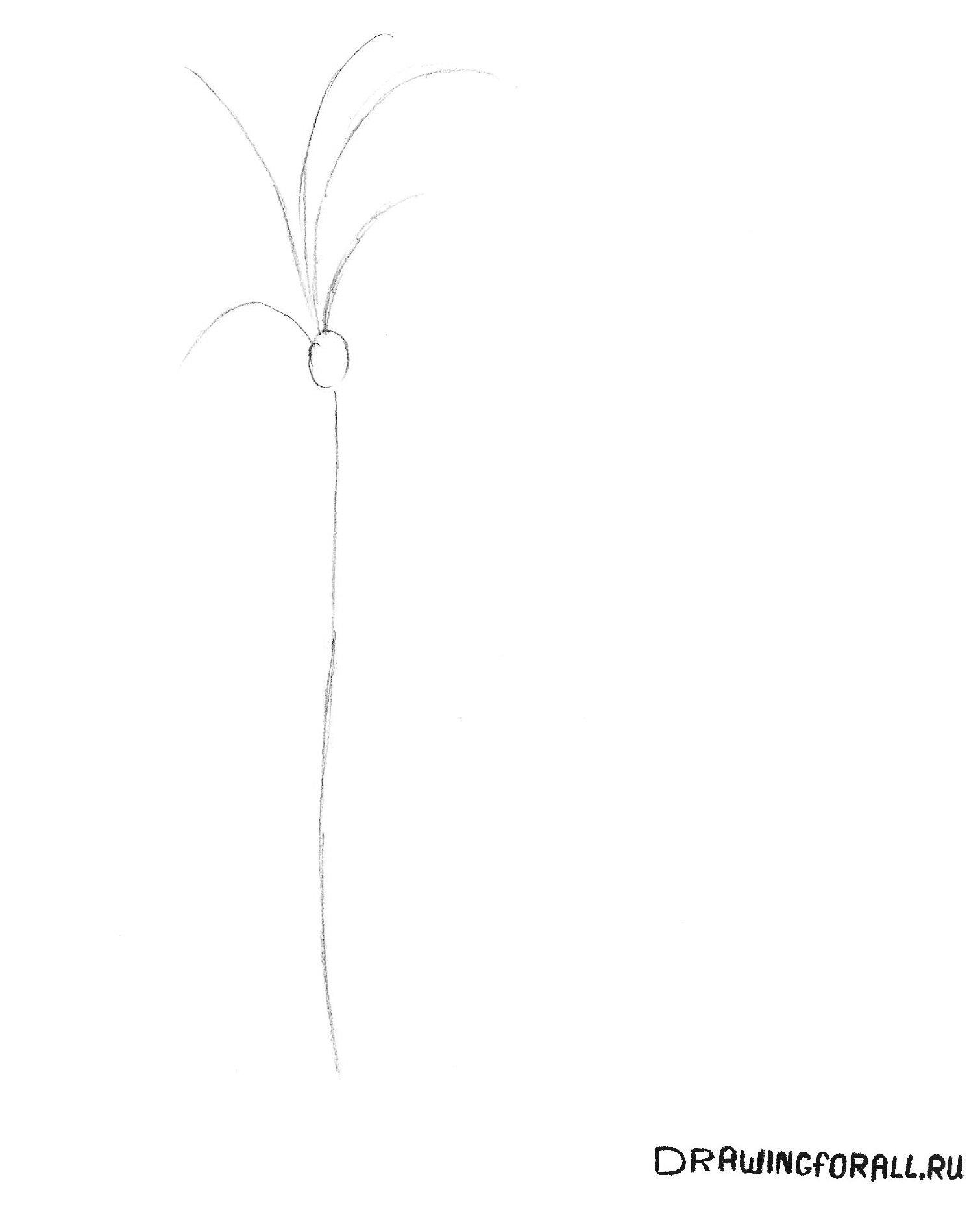 нарисованная пальма