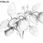 Как нарисовать клубнику