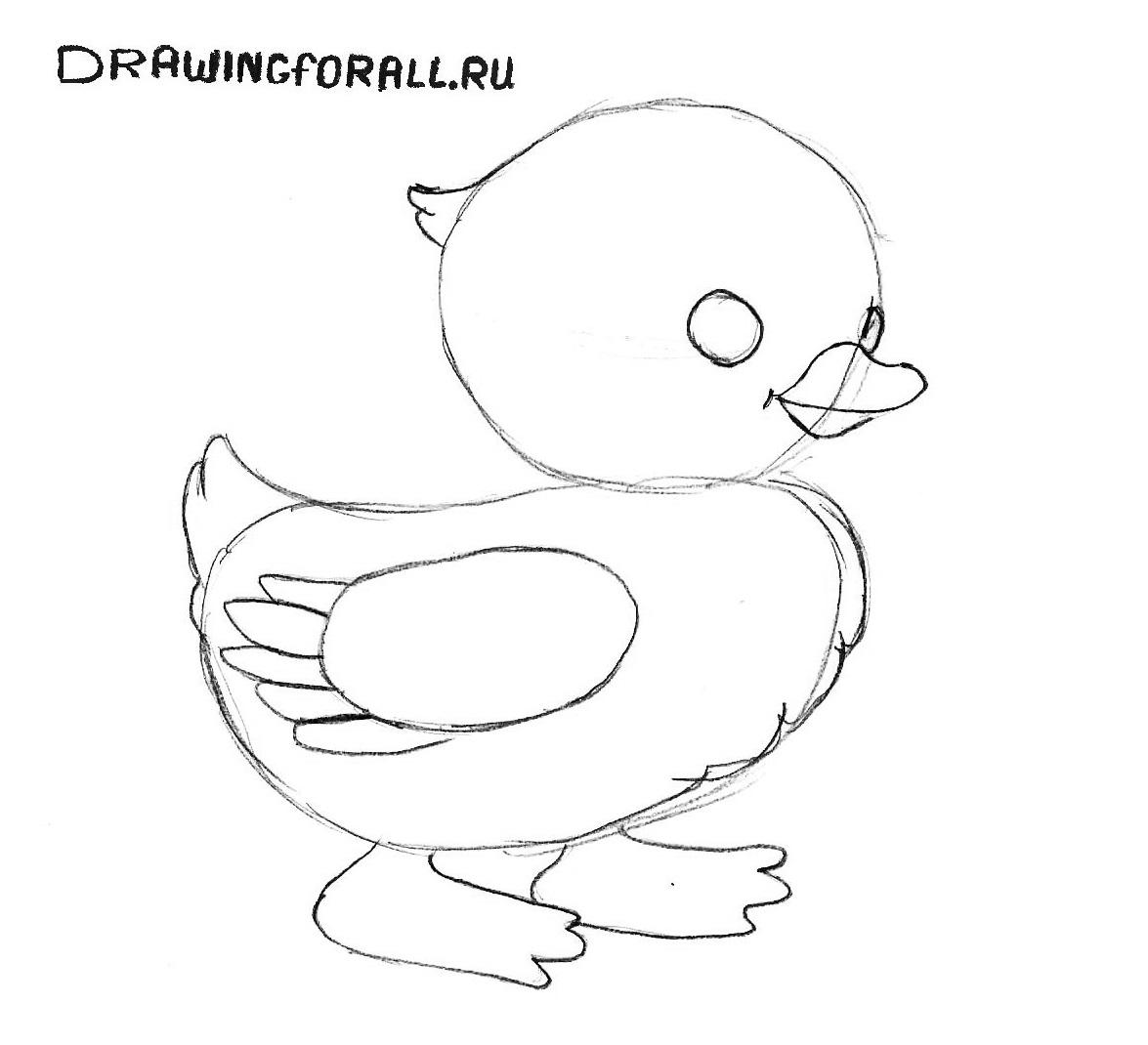 как нарисовать цыпленка поэтапно