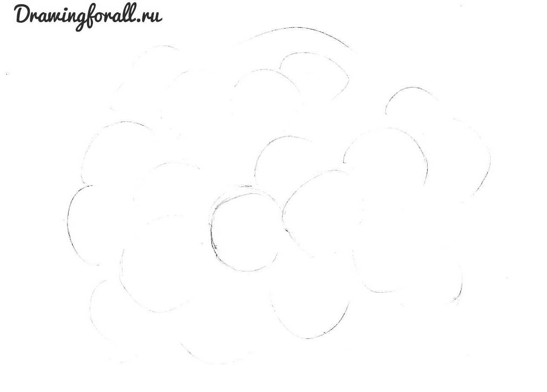 цветы нарисовать карандашом
