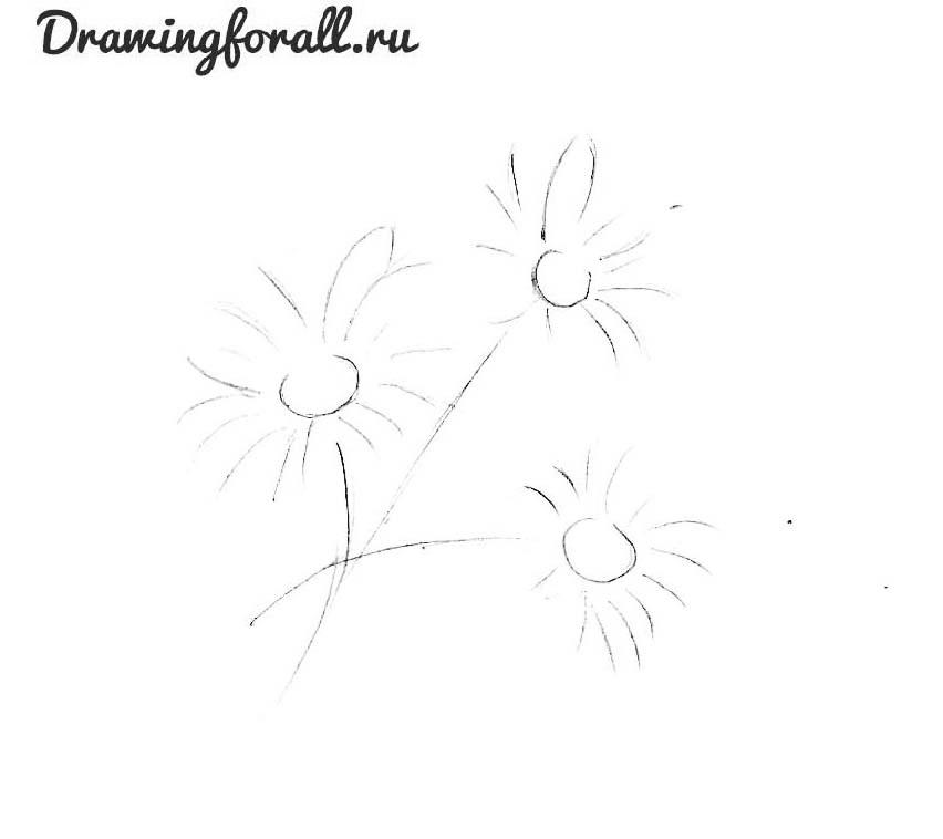 как нарисовать маргаритку
