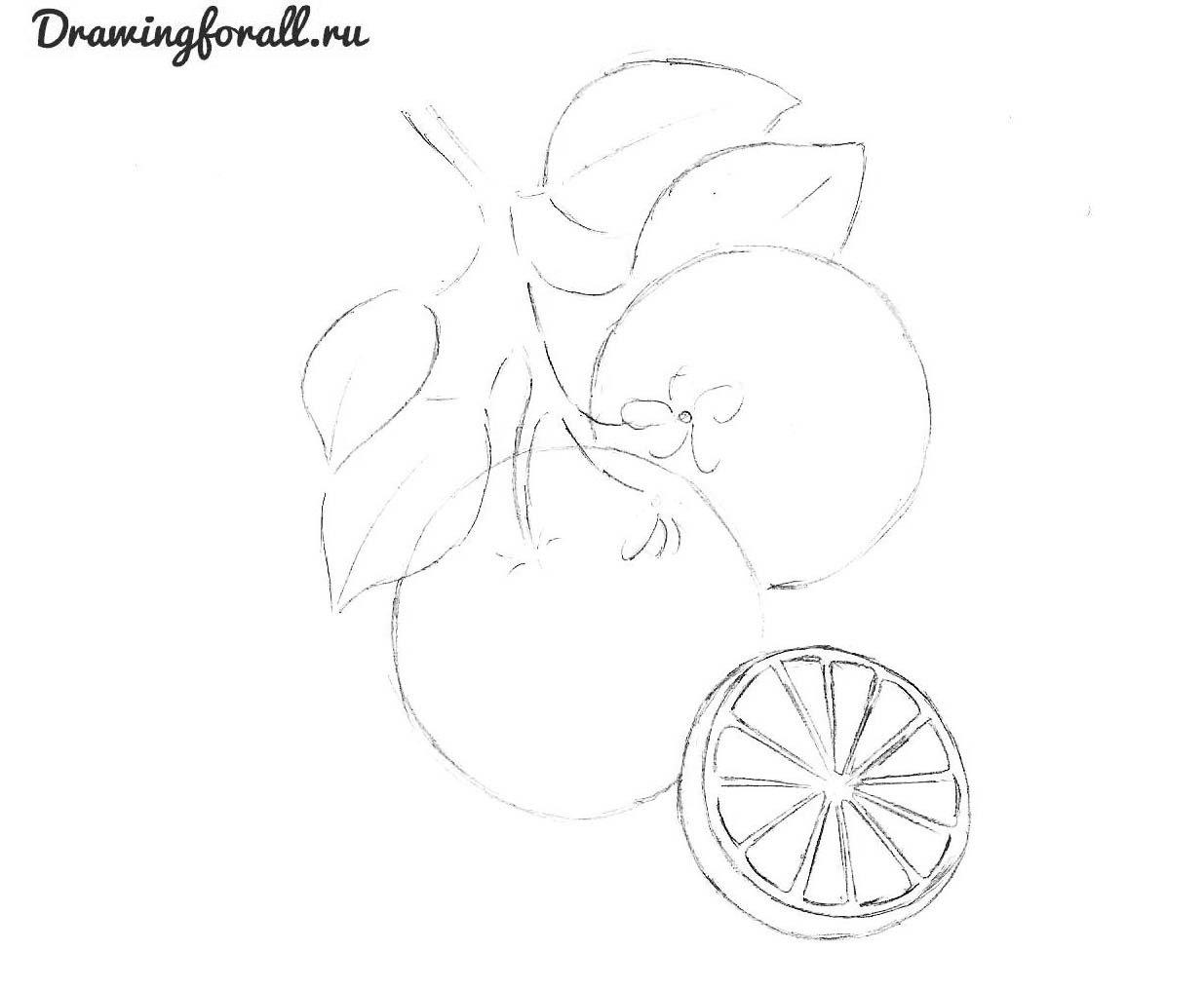 как нарисовать апельсин карандашом поэтапно