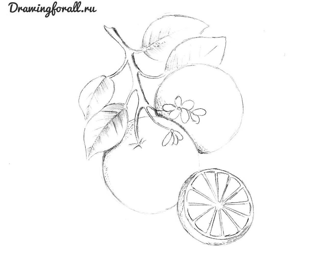 как поэтапно нарисовать апельсин