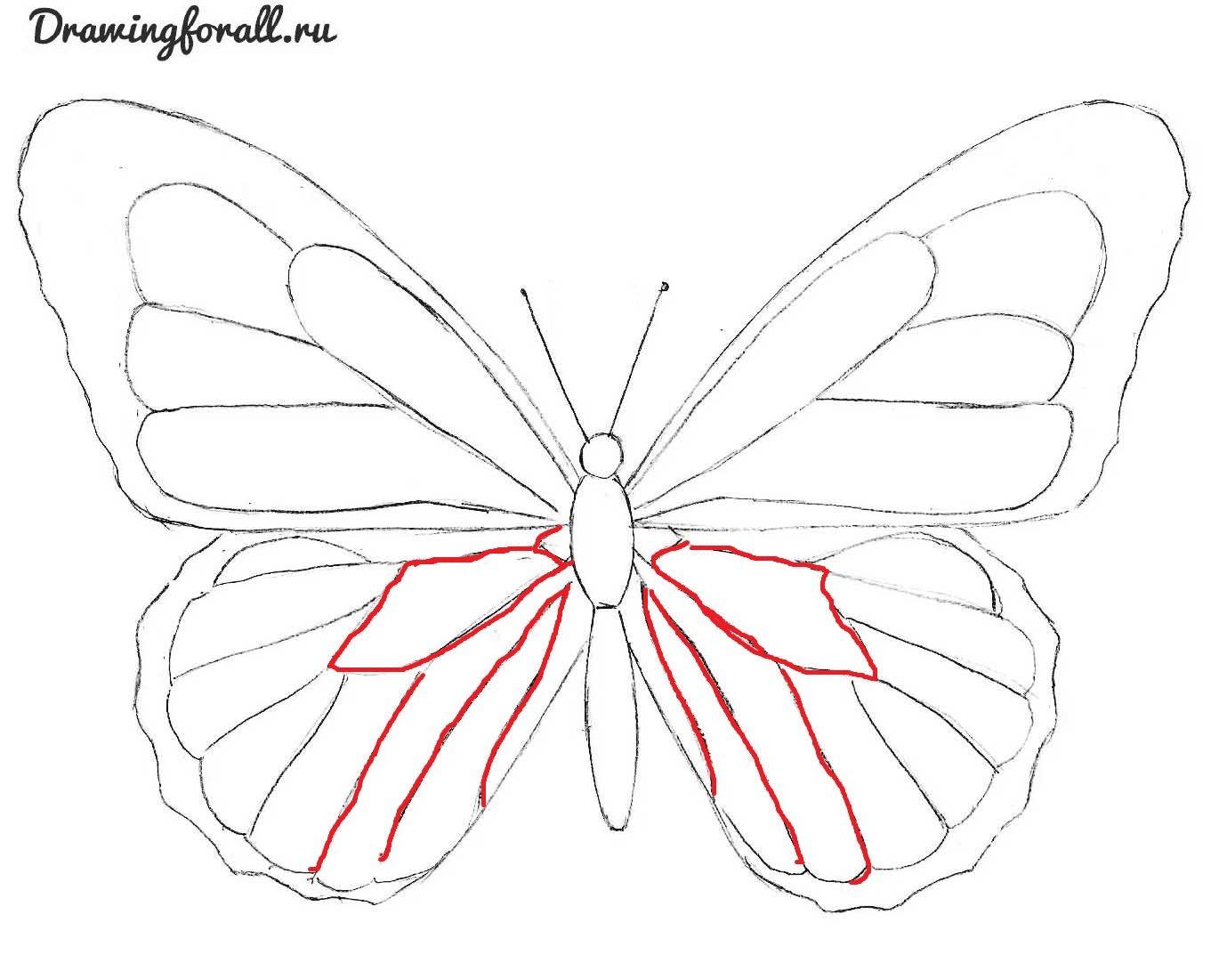 как-нарисовать-красивую-бабочку-карандашом