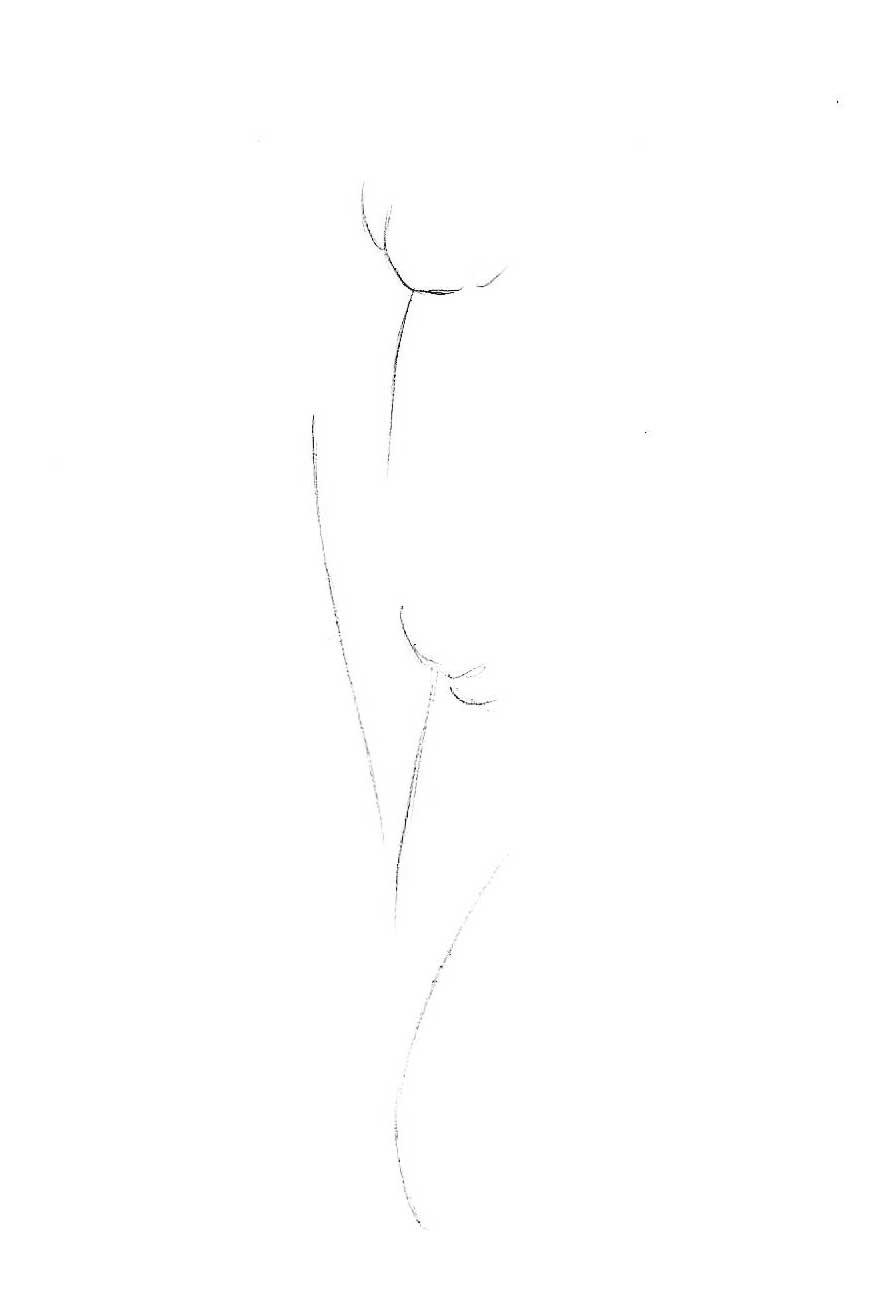 как нарисовать тюльпан
