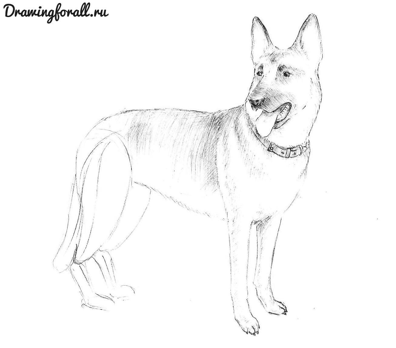 пошагово нарисовать собаку
