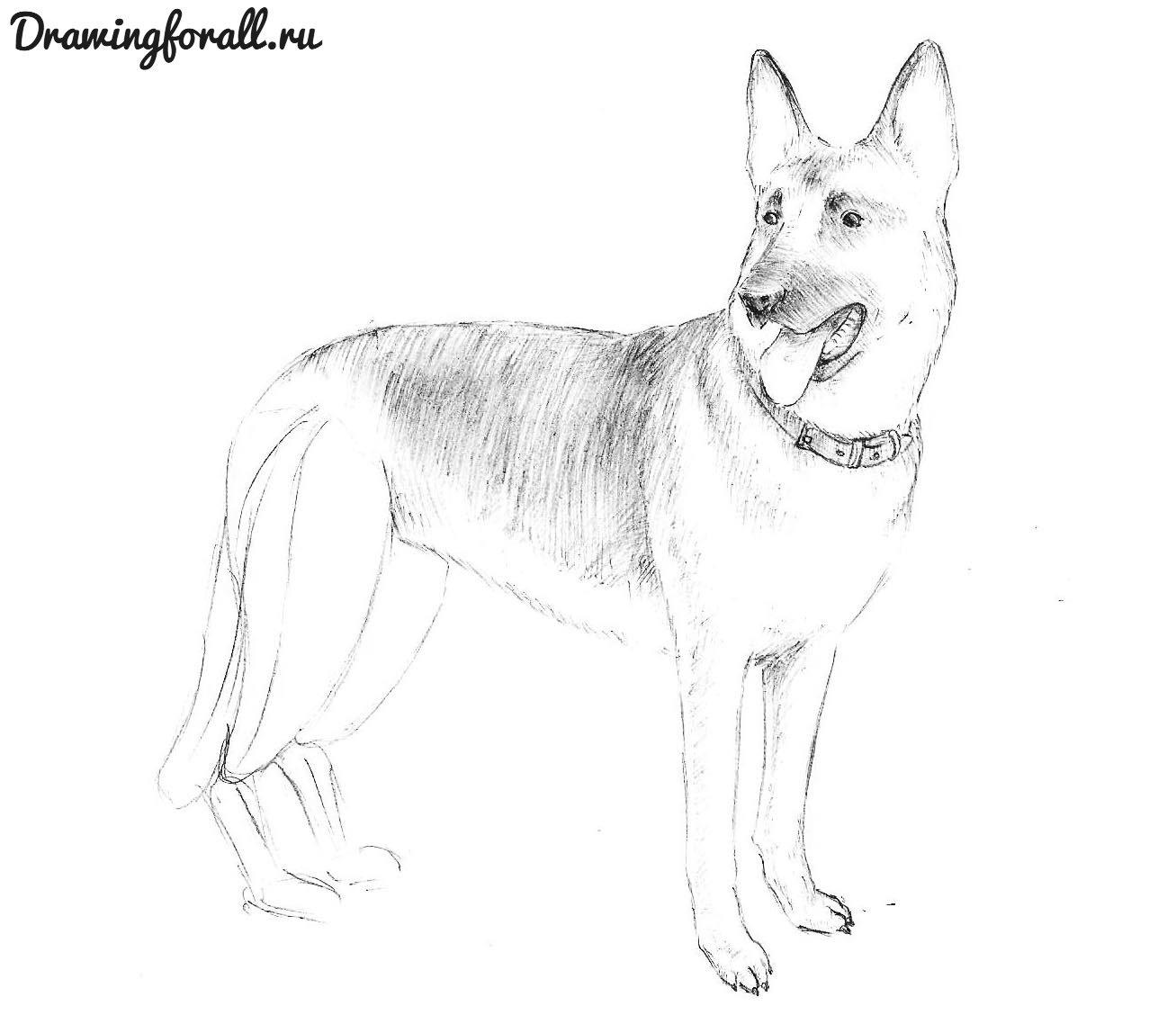 нарисовать лапу собаки