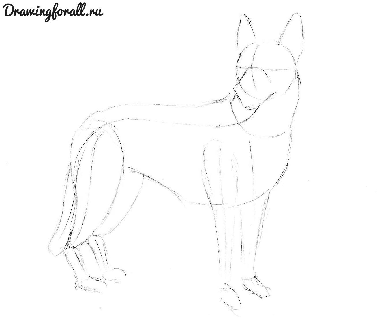 как нарисовать собаку карандашом