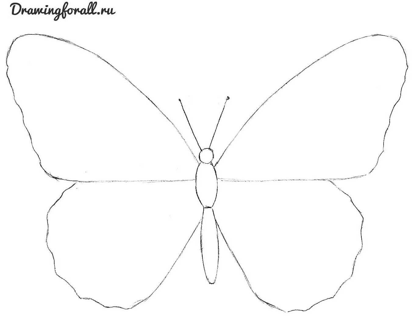 Как своими руками сделать бабочку нарисовать 17