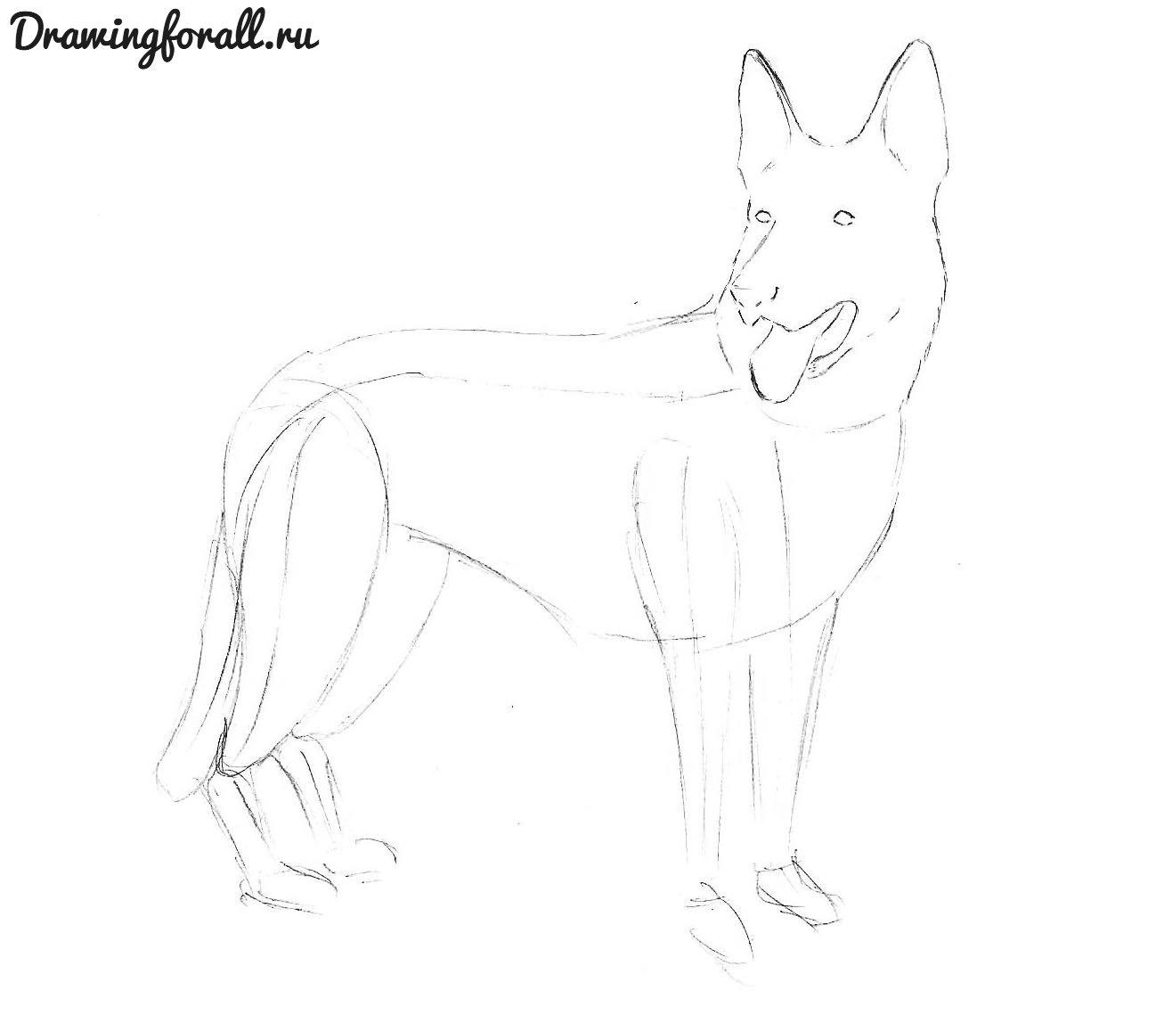 нарисовать рисунок собаки