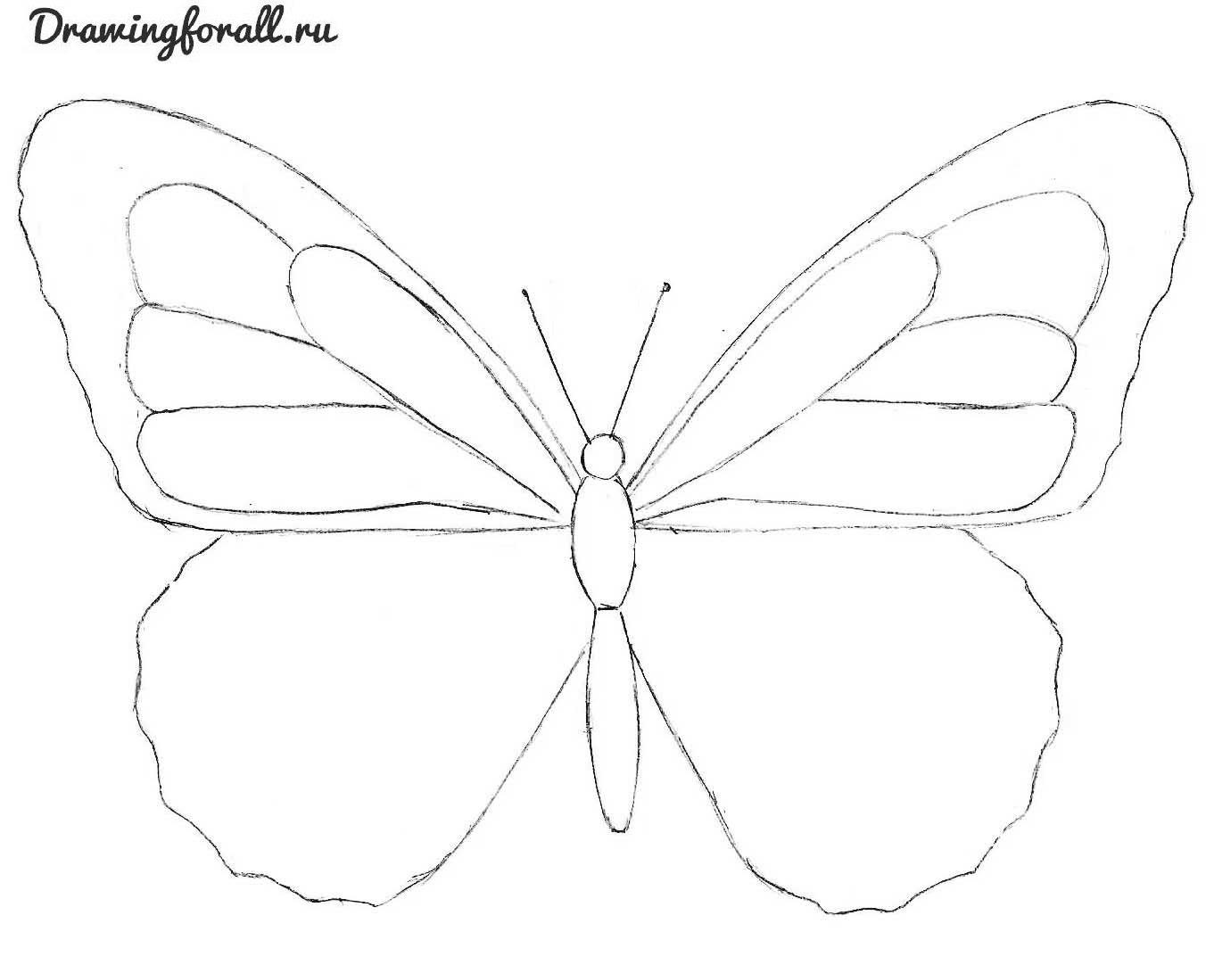 как красиво нарисовтать бабочку поэтапно