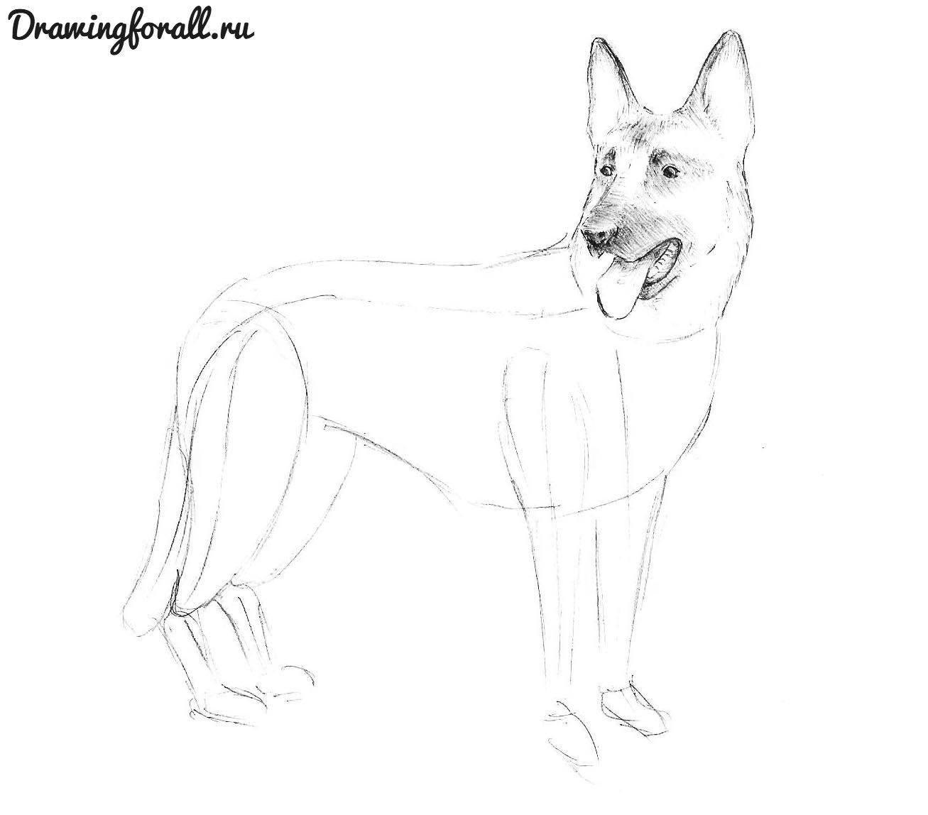 как красиво нарисовать собаку