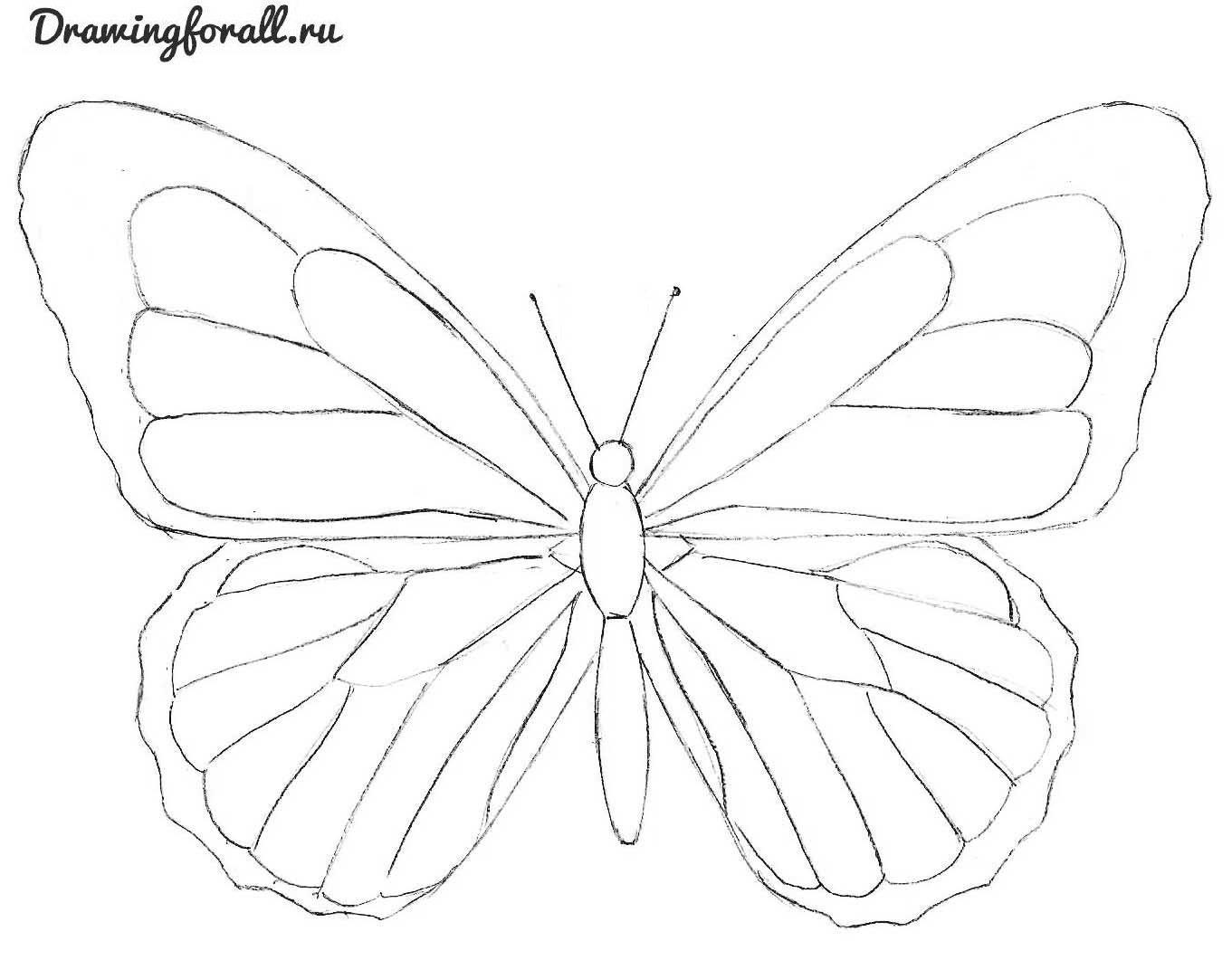 как нарисовать красивую бабочку карандашом