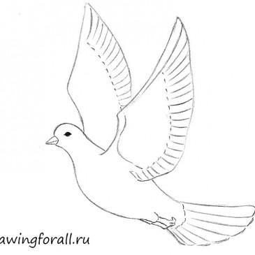 Как нарисовать голубя поэтапно карандашом