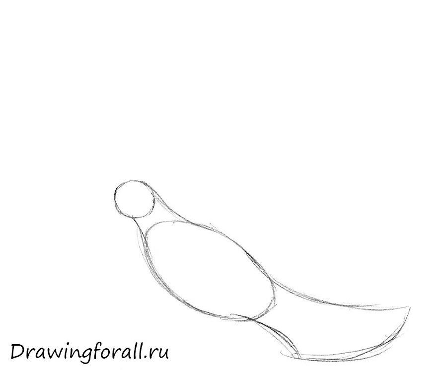 как нарисовать голубя поэтапно