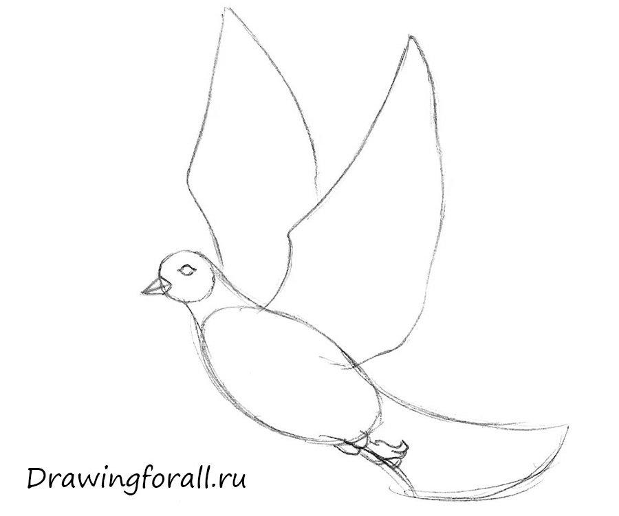 как рисовать голубя