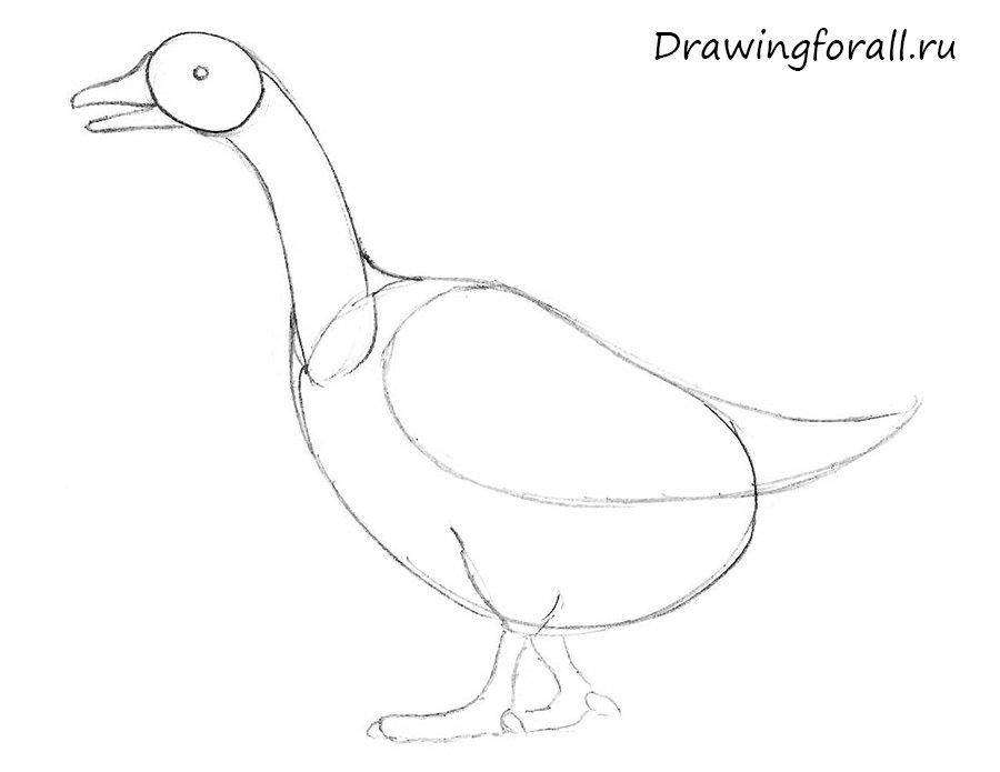 как нарисовать гуся для начинающих