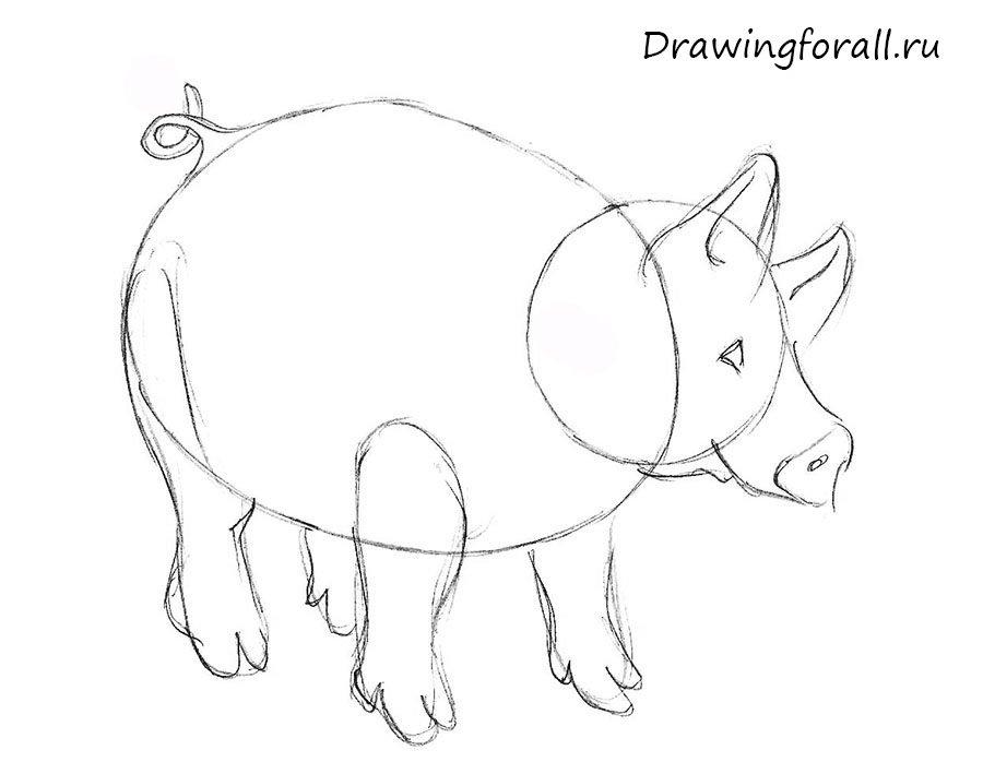как нарисовать свинью ребенку