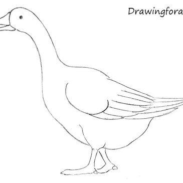 Как нарисовать гуся карандашом поэтапно для начинающих