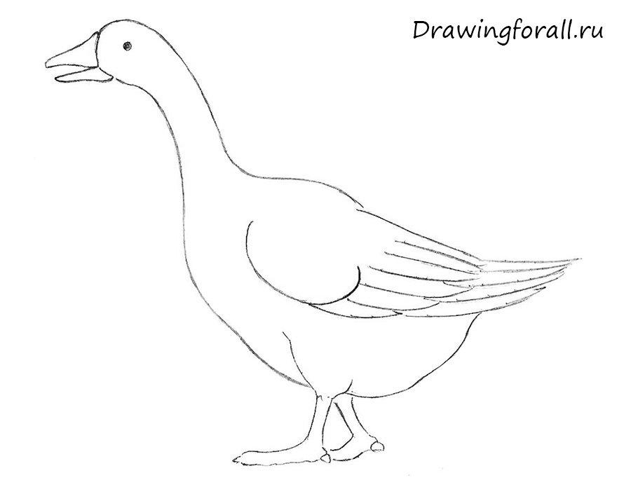 как нарисовать гуся для детей карандашом поэтапно