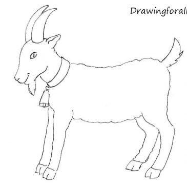 Как нарисовать козу карандашом для детей