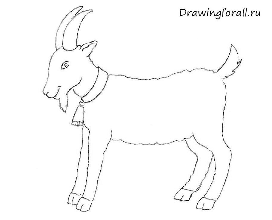 как нарисовать козу для начинающих