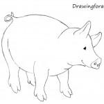 Как нарисовать свинку для начинающих