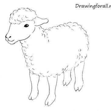 Как нарисовать овечку для начинающих поэтапно