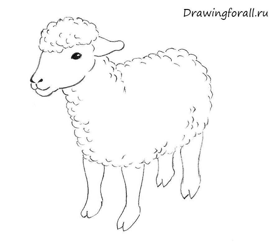 Как нарисовать карандашом поэтапно овечку
