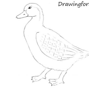 Как нарисовать утку карандашом поэтапно