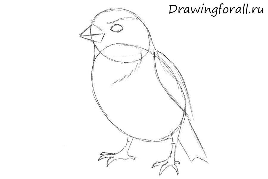 как нарисовать воробья поэтапно карандашом
