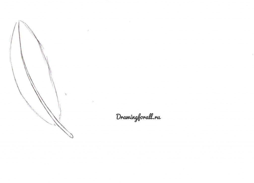 как нарисовать перо птицы