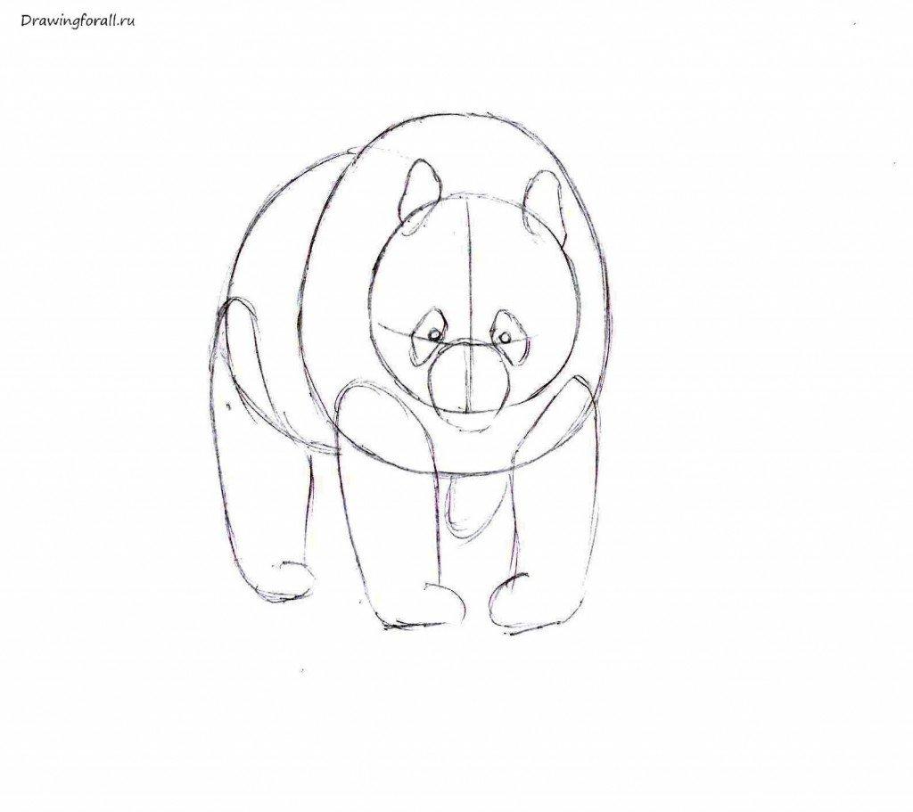 Как нарисовать милого панду карандашом