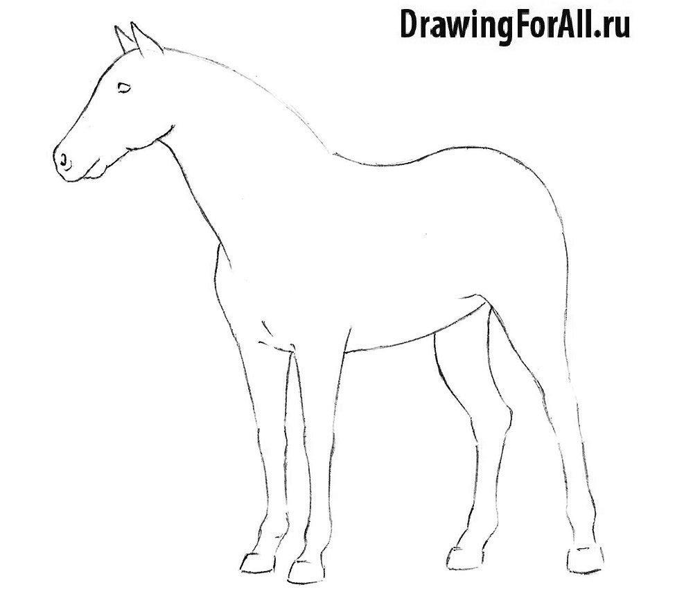 Нарисовать лошадь поэтапно для начинающих