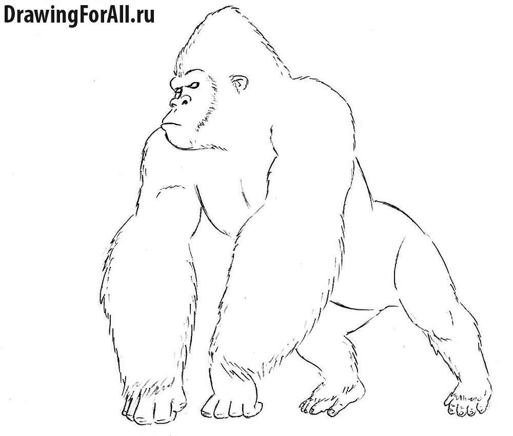 Как нарисовать Кинг Конга прорисовка контуров тела