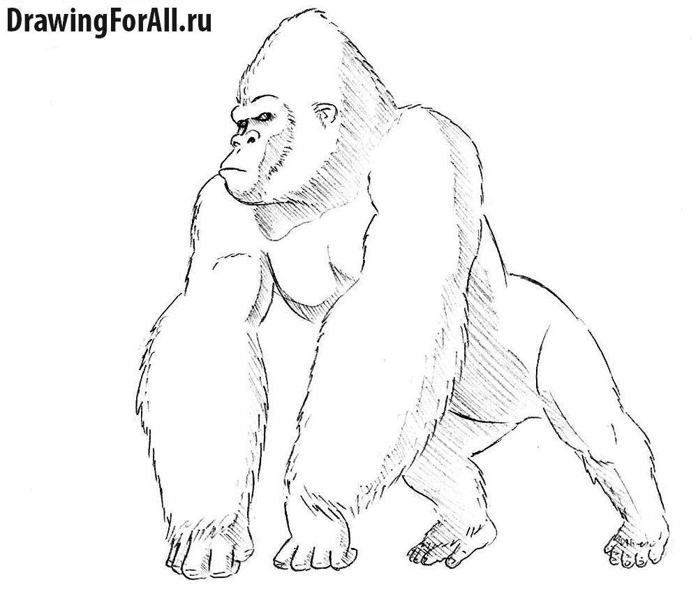 Как нарисовать Кинг Конга поэтапно